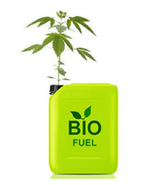 Biofuels Pros And Cons >> Industrial Hemp Used As Biofuel Pros And Cons Extraction